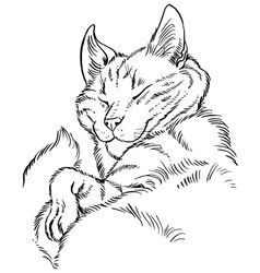 fluffy cat comfortably sleeps vector image