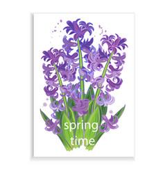 spring flowers purple hyacinths vector image