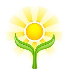 Sun above two green leaves vector image vector image
