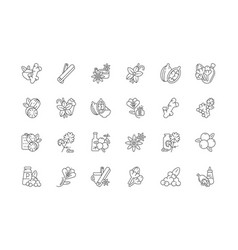 Asian spices linear icons set vector