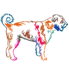 colorful decorative standing portrait of lagotto vector image