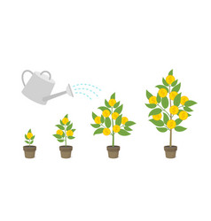 money tree grows in a pot water from watering vector image