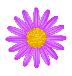 Purple Daisy Flower on A White Background vector