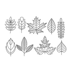 set doodle leaves in line vector image