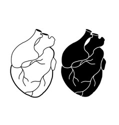Set realistic heart with aorta and veins vector