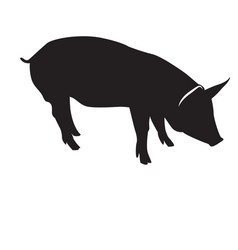 isolated pig silhouette vector image vector image