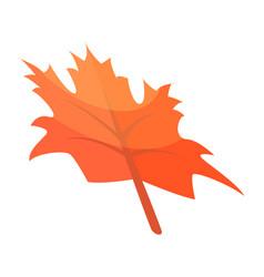 autumn maple leaf icon isometric style vector image