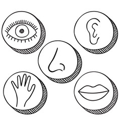 Five senses icons vector