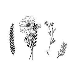 minimalistic flower graphic sketch drawing trendy vector image