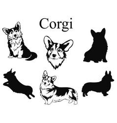 set corgi collection pedigree dogs black vector image