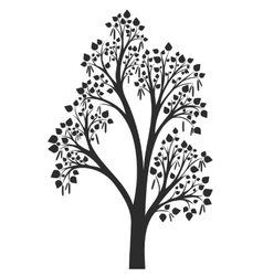 silhouette of birch tree with leaves vector image