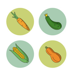 white background with vegetables carrot zucchini vector image