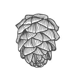 Hand drawn pine cone vector