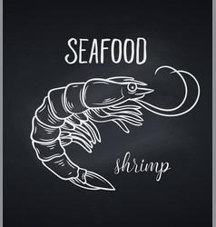 hand drawn shrimp vector image