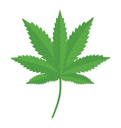 Canabis leaf vector image