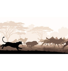 Hunting lions vector image vector image