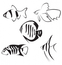 fish line drawing vector image vector image