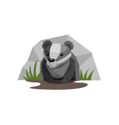 badger in the hole on a white vector image
