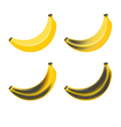 Banana stage rotting bananas beautiful yellow vector