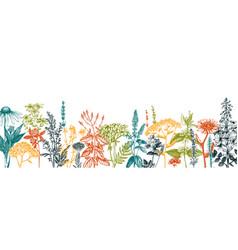 Hand drawn medicinal herbs banner design flowers vector