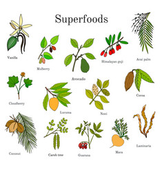set of hand drawn superfood vector image