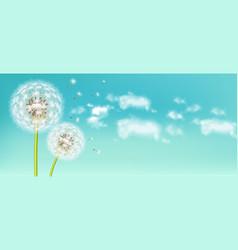 Spring dandelion flower realistic sky vector