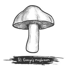 st george s mushroom sketch vector image