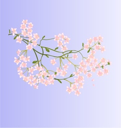 Twig with small flowers nature background vector