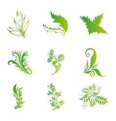 Vintage Floral Design Elements With Green Leaf vector image