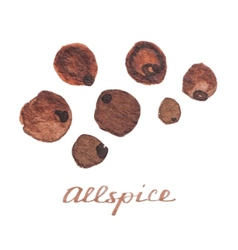 Watercolor allspice on the white background vector