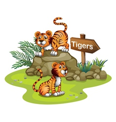 Two tigers with a wooden arrow board vector image