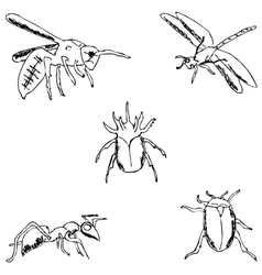 Insects A sketch by hand Pencil drawing vector