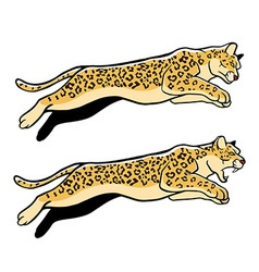 Jumping Leopard vector