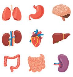 organs set vector image