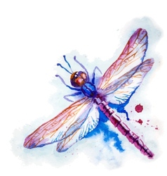 Purple Watercolor Dragonfly vector image