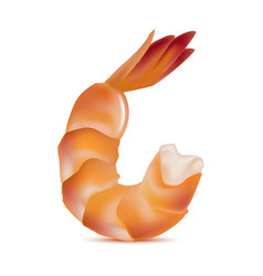 realistic detailed shrimp vector image