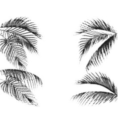 Various tropical palm leaves stylized dots design vector