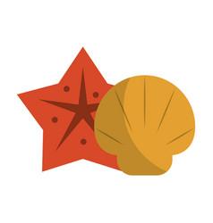 sea star and shell vector image