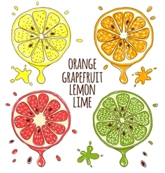 Fresh fruits slices Lemon and lime orange vector image vector image