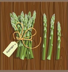 Asparagus vegetable stem vector