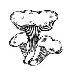 oyster tree mushroom engraving vector image