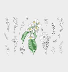 set hand drawing doodle floral design elements vector image