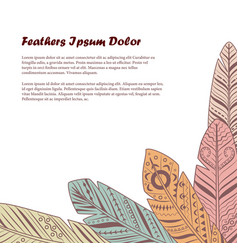 Vintage feathers background vector
