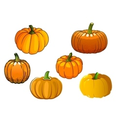 Orange pumpkin vegetables in cartoon style vector image vector image
