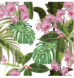 background with exotic pink orchid flowers palm m vector image