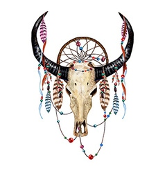 Bull Skull Feathers vector image