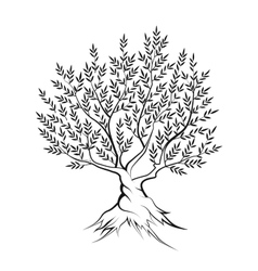 Olive tree outline silhouette icon vector image