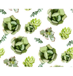 Seamless pattern of green colorful succulent vector