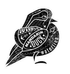 Bird Mandarin Duck vector image