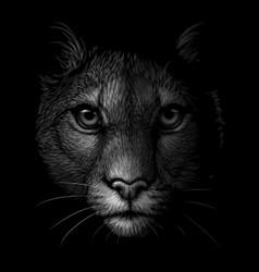 cougar monochrome portrait a mountain lion vector image